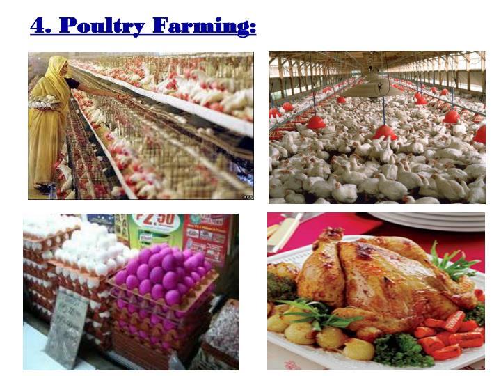 4. Poultry Farming: