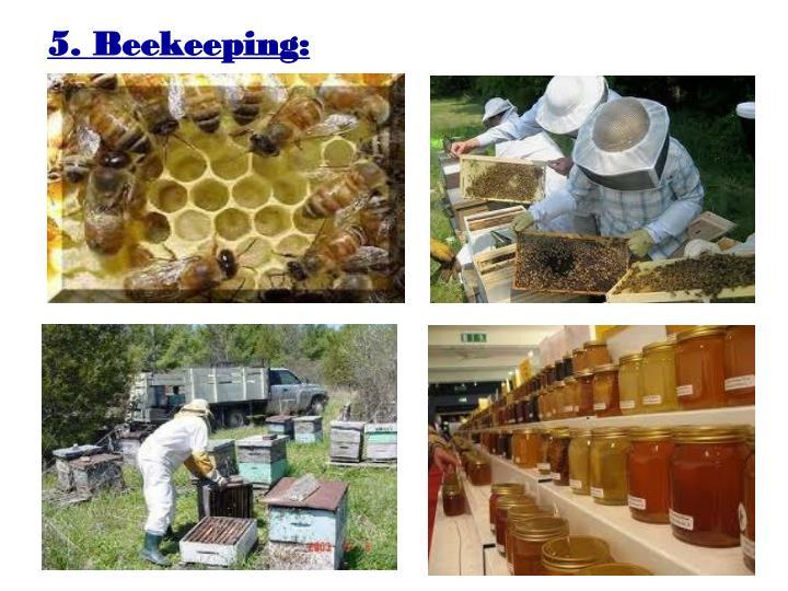 5. Beekeeping: