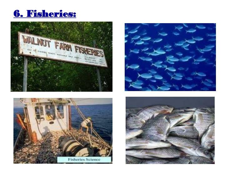 6. Fisheries: