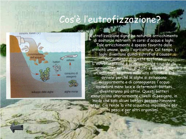 Cos'è l'eutrofizzazione?