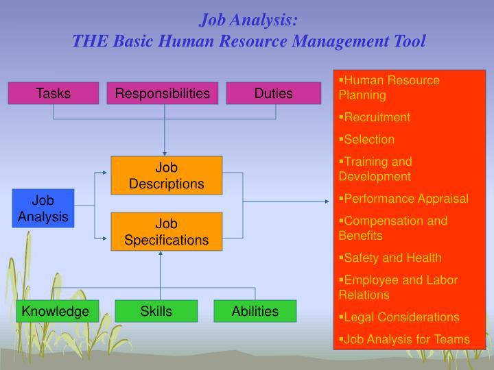 Job Analysis: