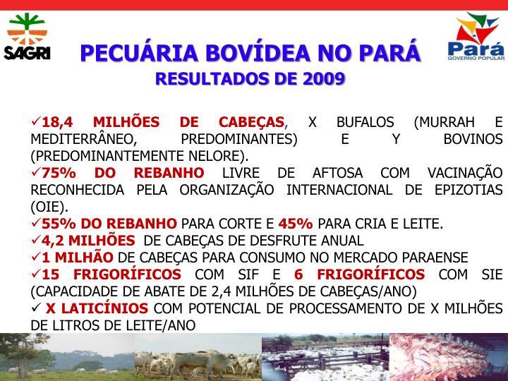 PECUÁRIA BOVÍDEA NO PARÁ