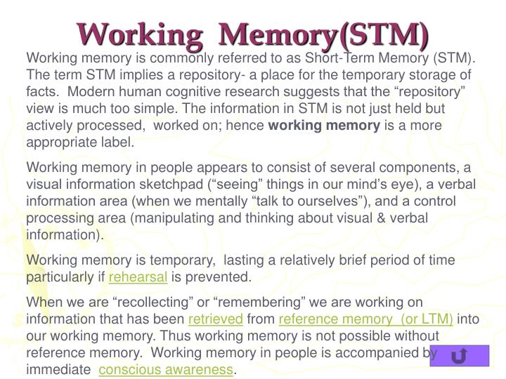 Working  Memory(STM)