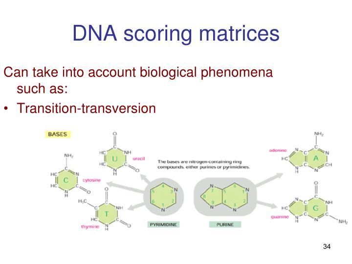 DNA scoring matrices