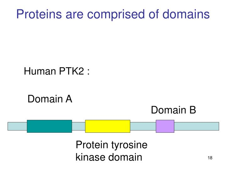 Proteins are comprised of domains