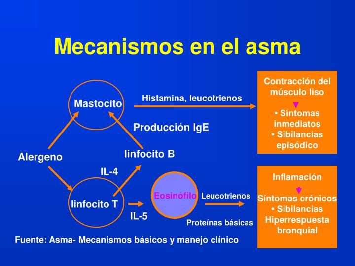 Mecanismos en el asma