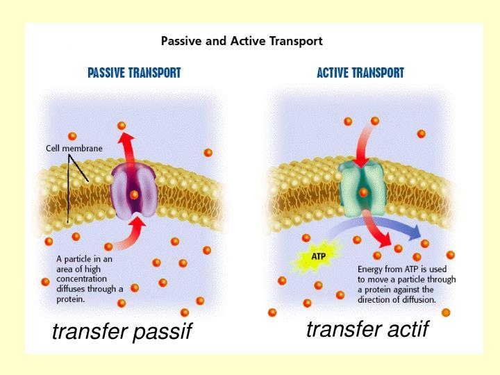 transfer actif
