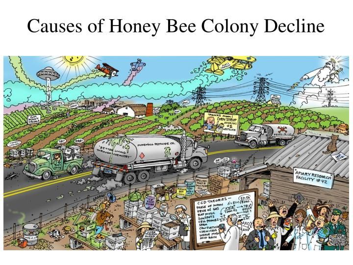 Causes of Honey Bee Colony Decline