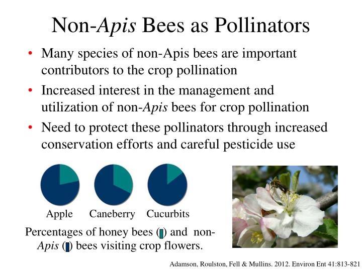 Non apis bees as pollinators