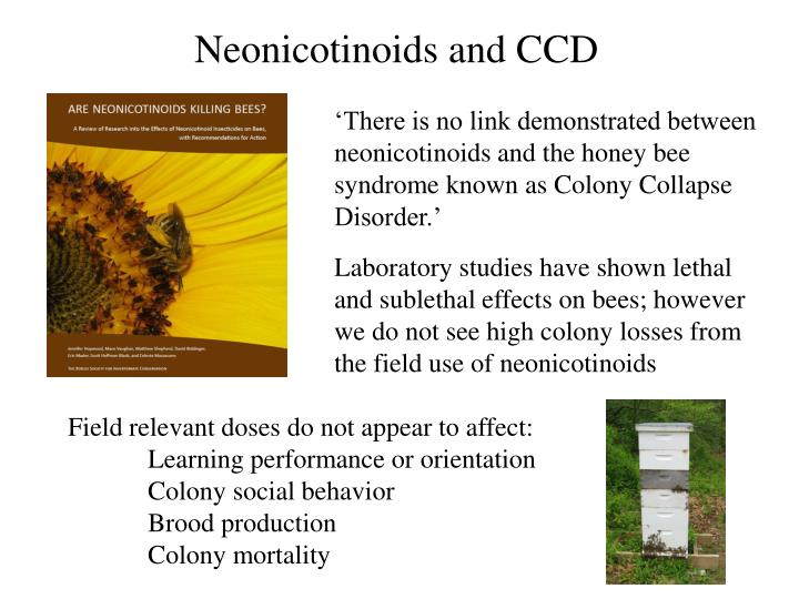 Neonicotinoids and CCD