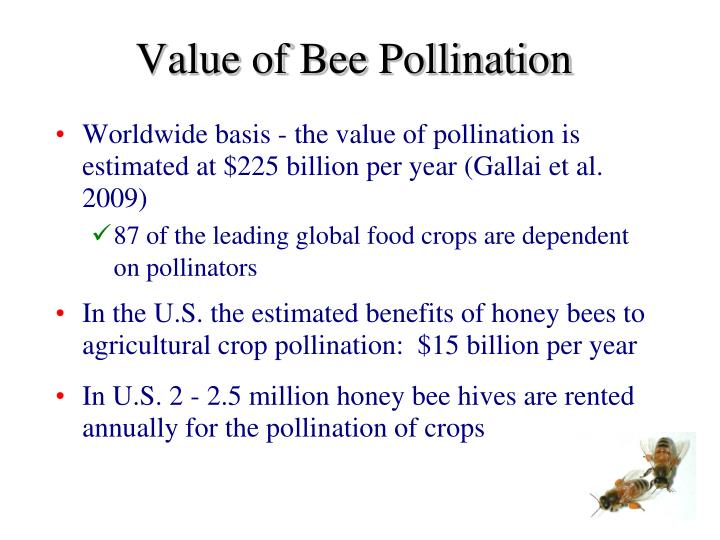 Value of Bee Pollination