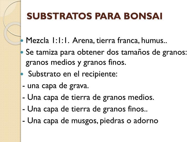 SUBSTRATOS PARA BONSAI