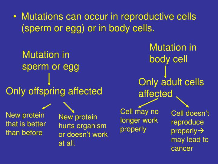 Mutations can occur in reproductive cells (sperm or egg) or in body cells.