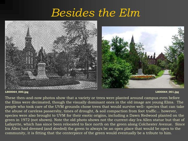 Besides the Elm