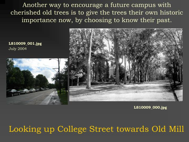 Another way to encourage a future campus with cherished old trees is to give the trees their own historic importance now, by choosing to know their past.