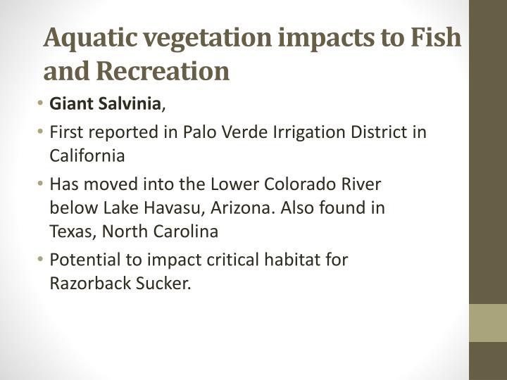 Aquatic vegetation impacts to Fish and Recreation
