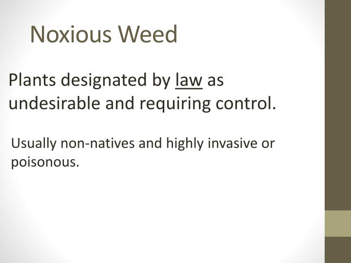 Noxious Weed
