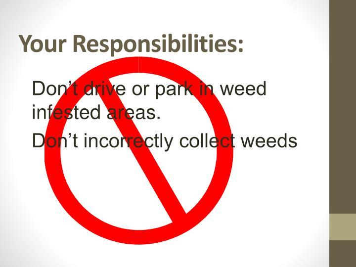 Your Responsibilities: