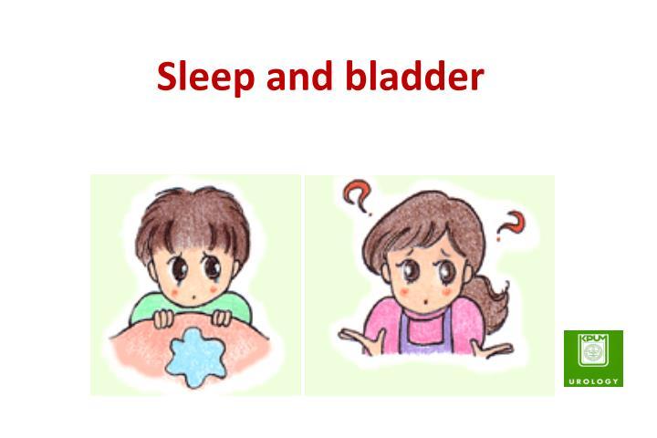Sleep and bladder