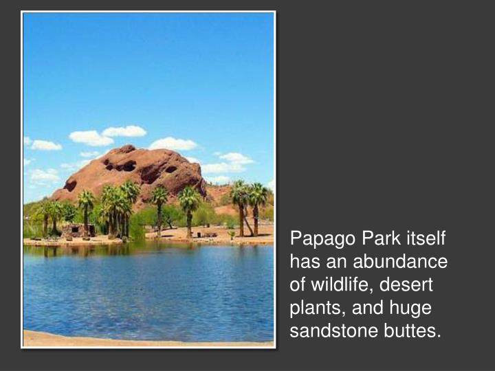 Papago Park itself has an abundance of wildlife, desert plants, and huge sandstone buttes.