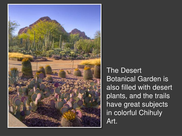 The Desert Botanical Garden is also filled with desert plants, and the trails have great subjects in colorful Chihuly Art.