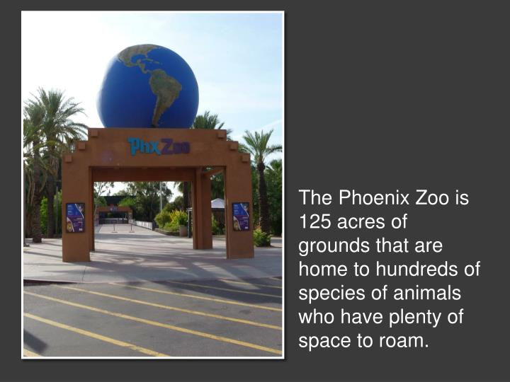 The Phoenix Zoo is 125 acres of grounds that are home to hundreds of species of animals who have plenty of space to roam.