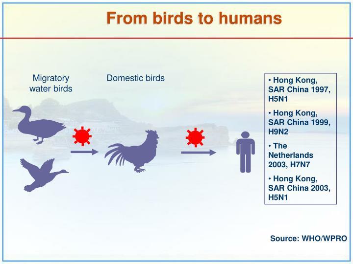 Domestic birds