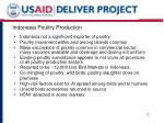 indonesia poultry production