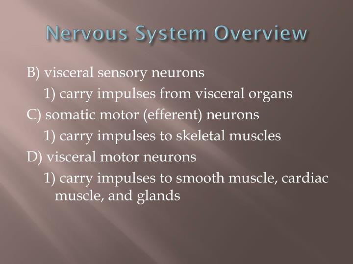 Nervous System Overview