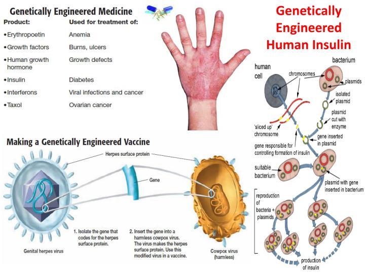 Genetically Engineered