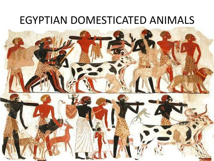 EGYPTIAN DOMESTICATED ANIMALS