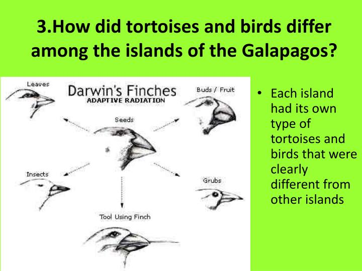 3.How did tortoises and birds differ among the islands of the Galapagos?