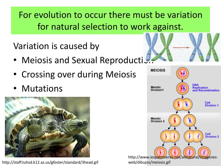 For evolution to occur there must be variation for natural selection to work against.