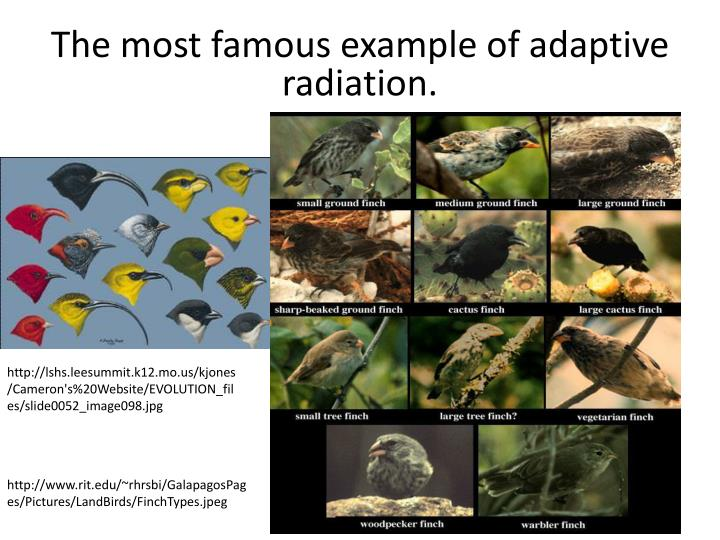 The most famous example of adaptive radiation.