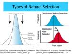 types of natural selection1