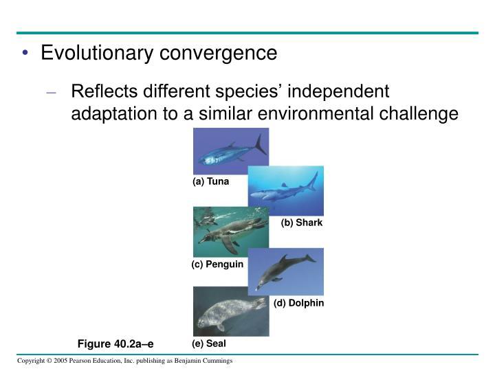 Evolutionary convergence