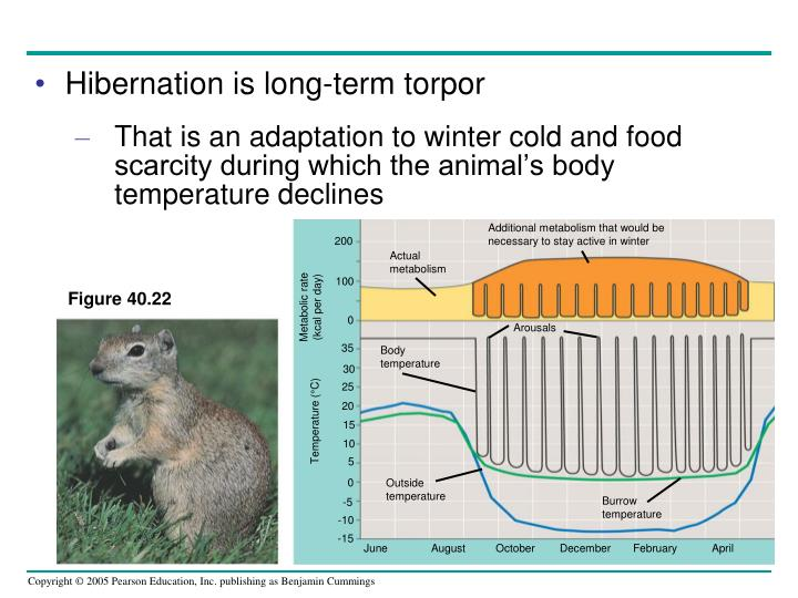 Hibernation is long-term torpor