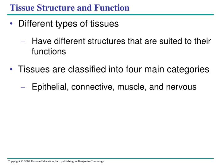 Tissue Structure and Function
