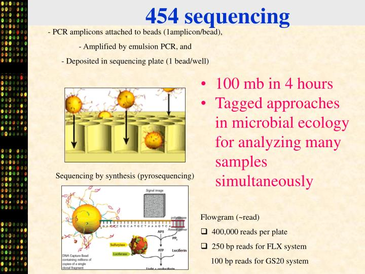 454 sequencing