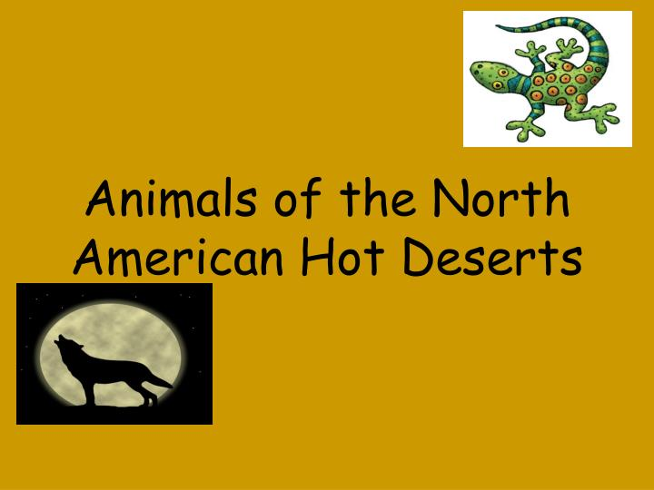 Animals of the North American Hot Deserts