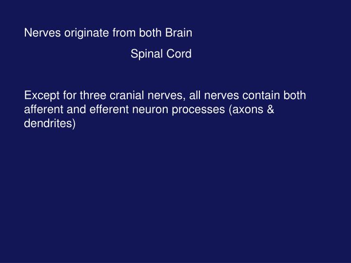 Nerves originate from both Brain