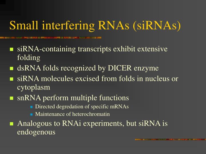 Small interfering RNAs (siRNAs)