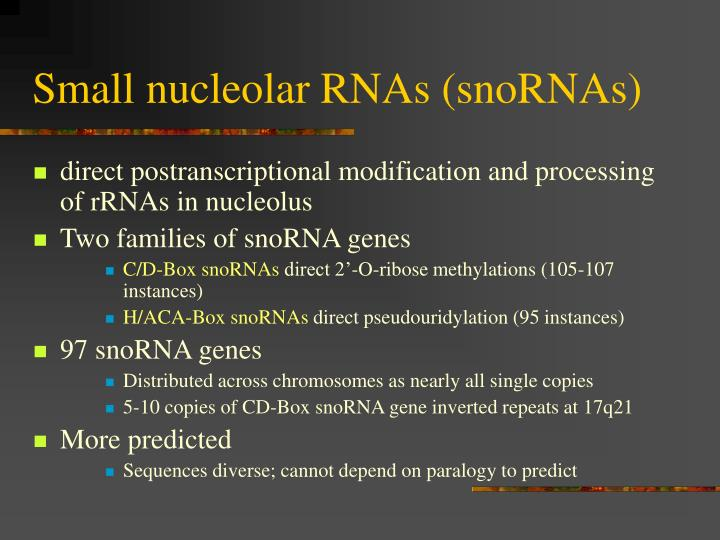 Small nucleolar RNAs (snoRNAs)