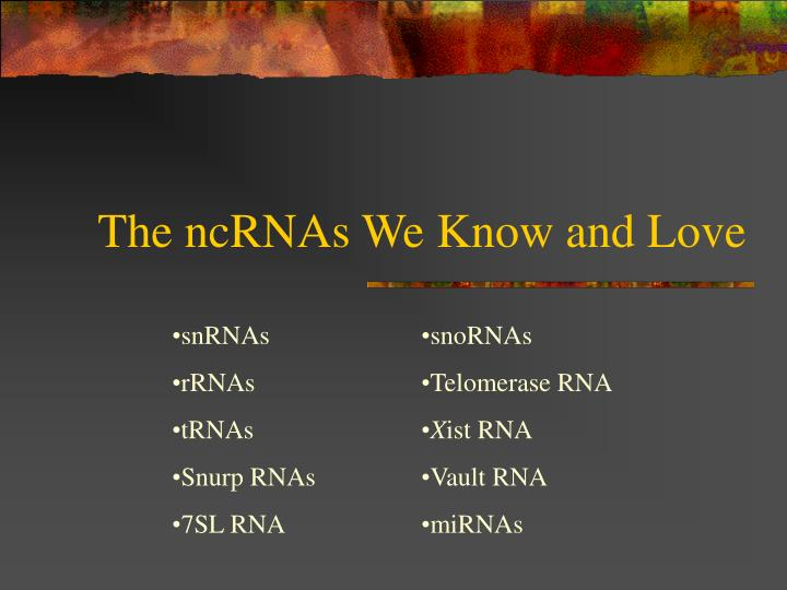 The ncRNAs We Know and Love