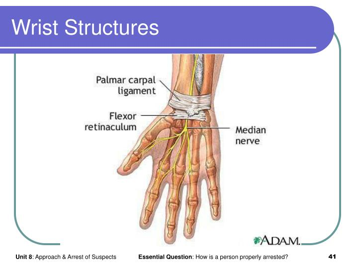 Wrist Structures