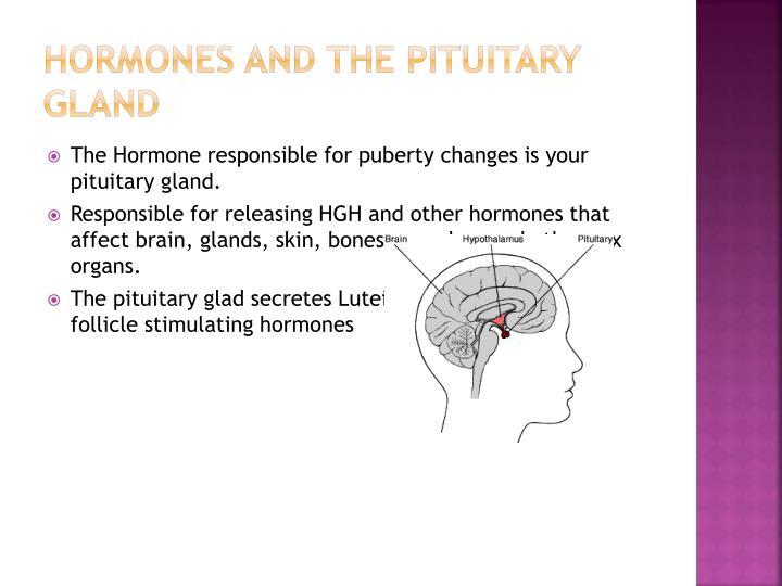 Hormones and the Pituitary Gland