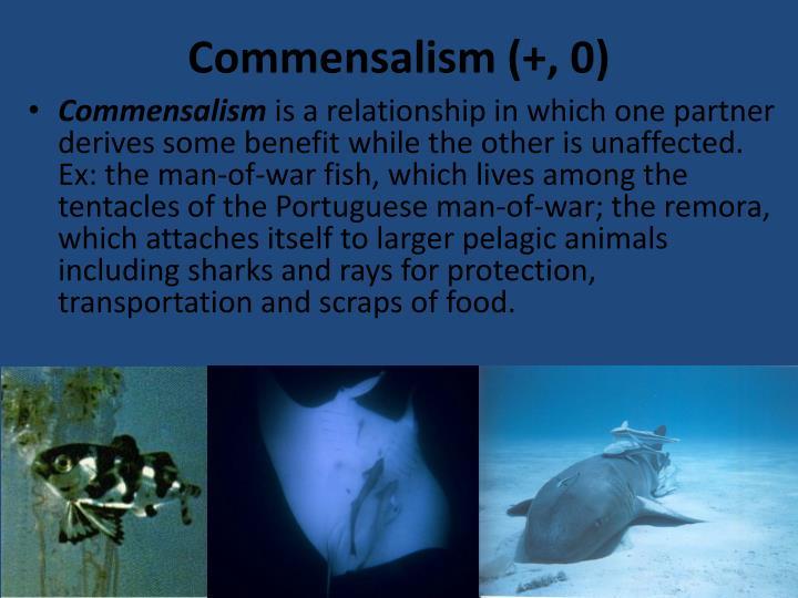 Commensalism (+, 0)