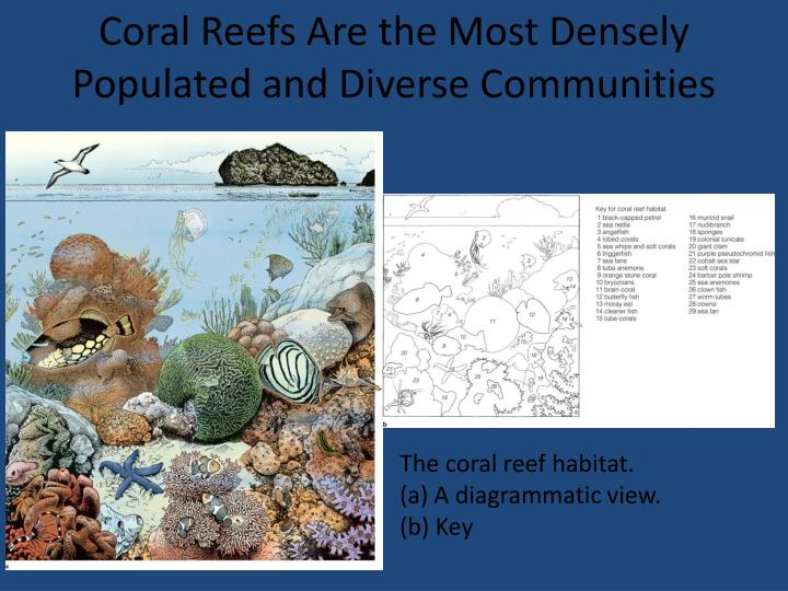 Coral Reefs Are the Most Densely Populated and Diverse Communities