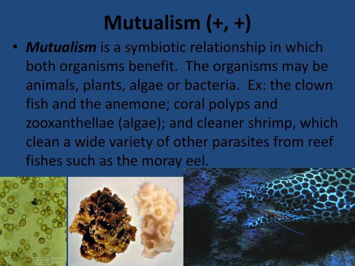 Mutualism (+, +)