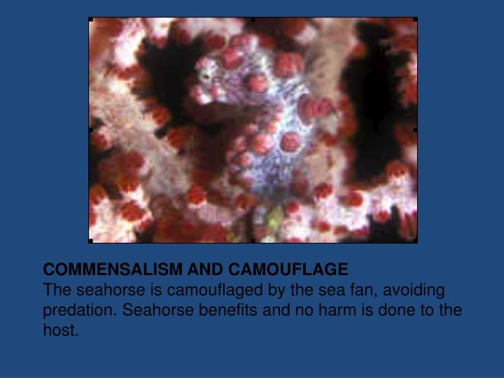 COMMENSALISM AND CAMOUFLAGE